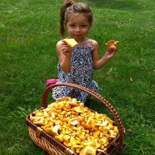 Chanterelles For Sale