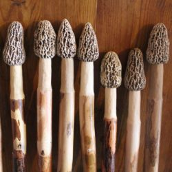 Morel Mushroom Hiking Sticks