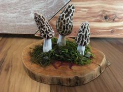 Handmade morel mushrooms